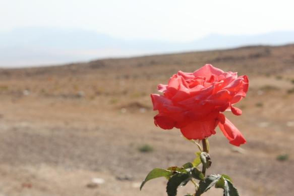 deserto-florescera